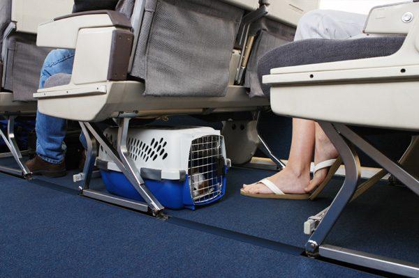 Azul vai dar produtos Pedigree e Whiskas em voos domésticos