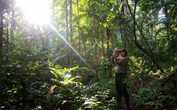 Povos pré-colombianos foram os primeiros a alterar a flora amazônica