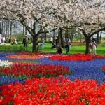 DIÁRIO lista bons motivos para visitar a Holanda em 2016
