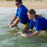 SeaWorld Orlando celebra ano recorde de animais resgatados
