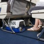Veja alguns cuidados indicados ao planejar uma viagem com pets