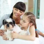 Nadai Confort Hotel, de Foz do Iguaçu, inaugura serviço de pet friendly