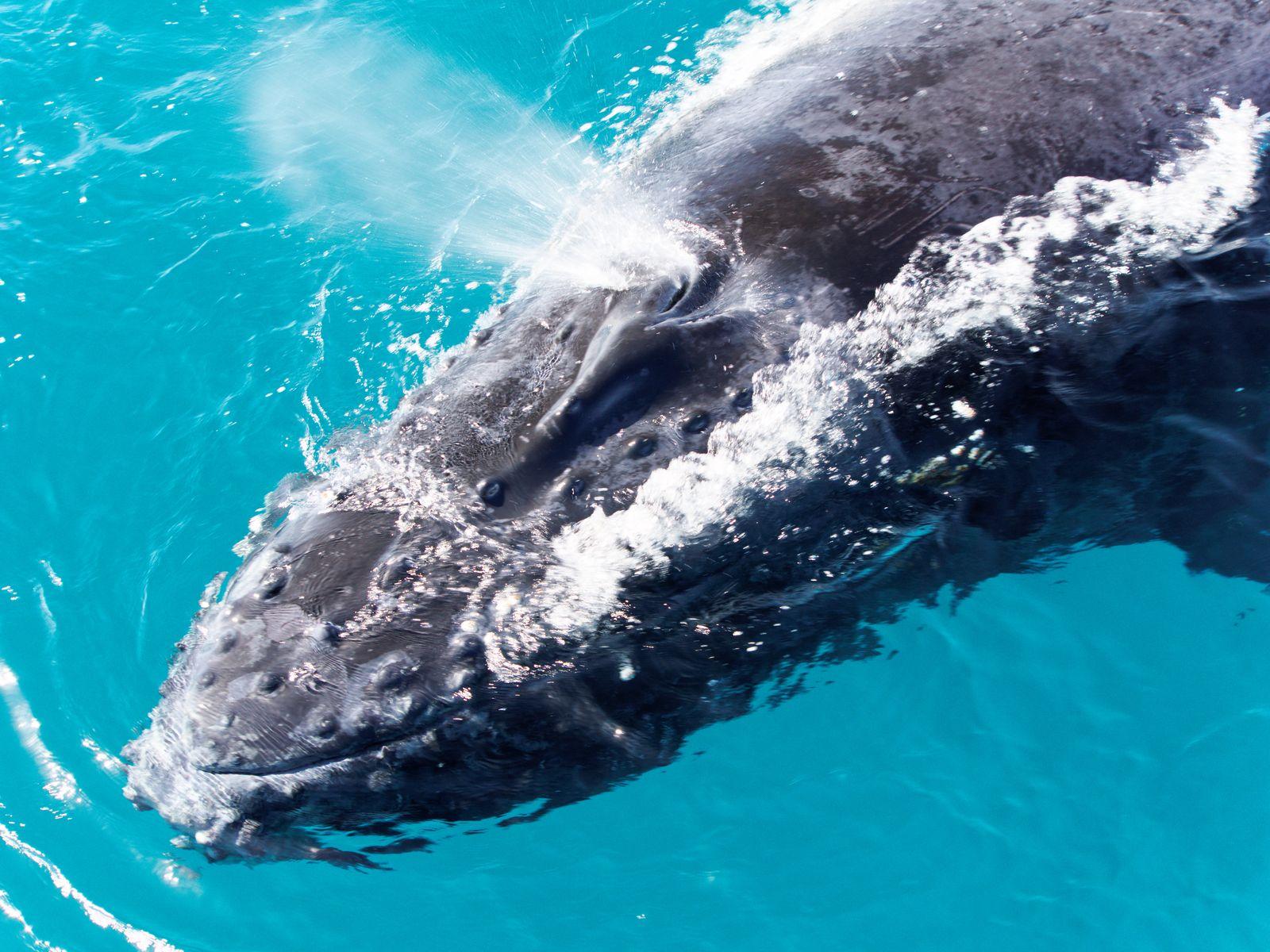Pousada na Bahia oferece passeios para visitar as baleias jubarte