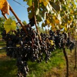 São Roque prepara programação para Dia Nacional do Vinho