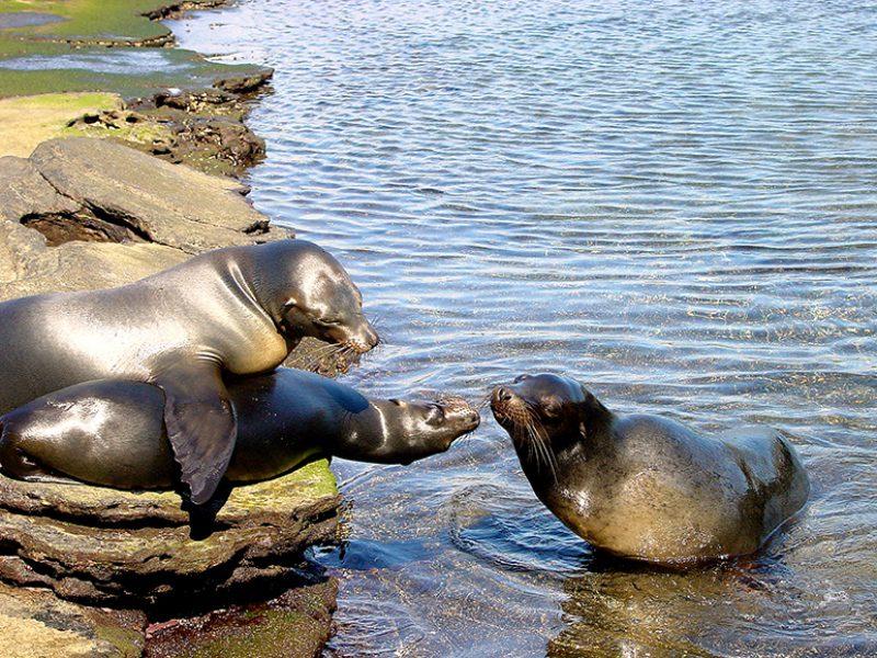 Nenhum dos animais ou aves dali se sente ameaçado por nada ou ninguém – outra magia do arquipélago – harmoniosa convivência