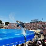 SeaWorld Parks & Entertainment anuncia novas atrações para 2017