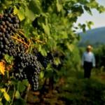 Produção de vinhos bate recorde na Região da capital dos EUA