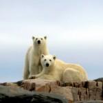 Noruega tem roteiros de observação de orcas e ursos polares