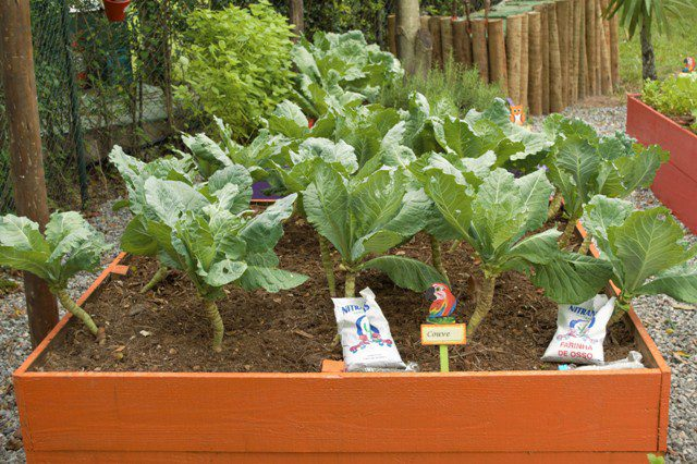horta-organica-sofital-guaruja-jequitimar