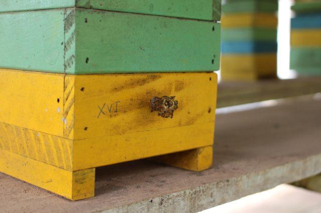 O trabalho obedece ciclos completos: criação de abelhas para o equilibrio biológico