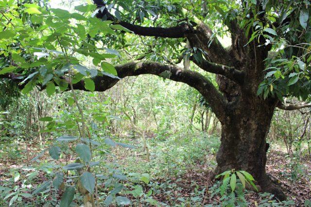 Preservação das nascentes: desde 2009, já foram plantadas quase 500 mil mudas de mais de 100 espécies nativas da região