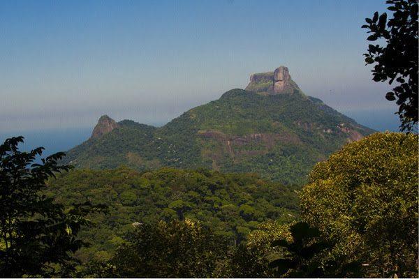 Parque Nacional da Tijuca. Foto: Daniel De Granville/Fundação Grupo Boticário.