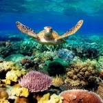 Destino mundialmente conhecido na Austrália tem descontos até março