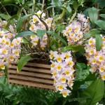 96ª Exposição de Orquídeas acontece na Liberdade