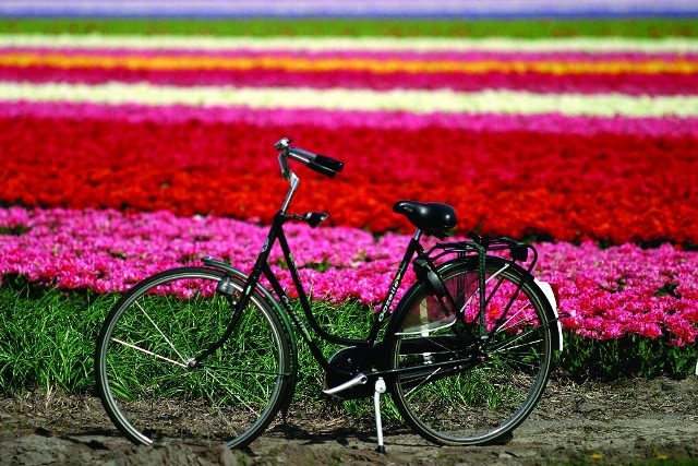Quem não tem uma bicicleta, ou não pode levar uma na viagem, pode alugar em uma das inúmeras lojas no centro de qualquer cidade (Foto: Divulgação)