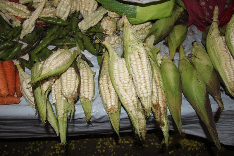 Maiz blanco gigante, produto exportação do Vale Sagrado (Foto: Paulo Atzingen)