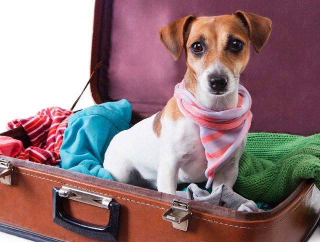 Stella Barros Turismo celebra Dia dos Pais com adoção de animais