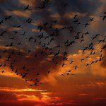 Pare de matar passarinhos