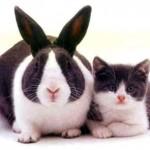 Blogueiro de turismo: gato ou lebre?