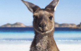 Universidades australianas fecham parceria com a UNESP
