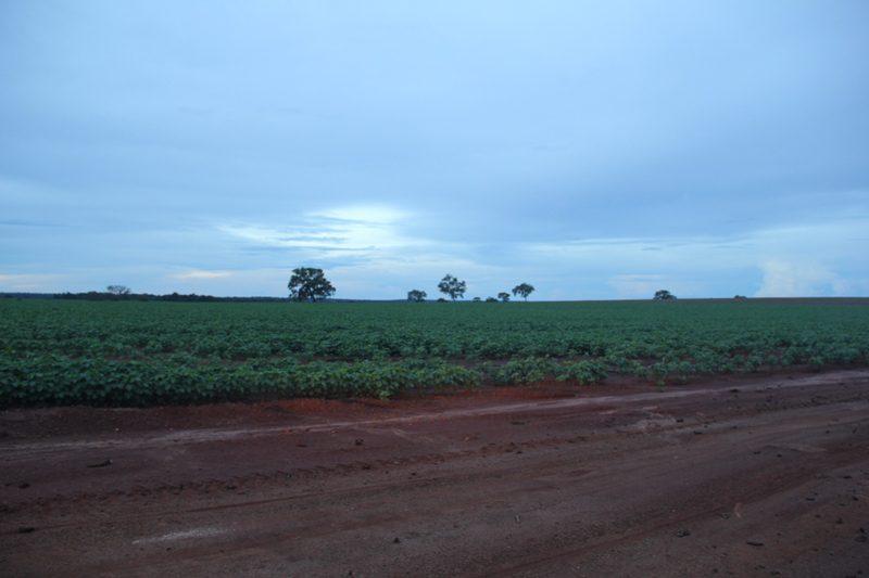 A base econômica da região ainda é a pecuária e a plantação de soja em larga escala (Crédito: Paulo Atzingen)
