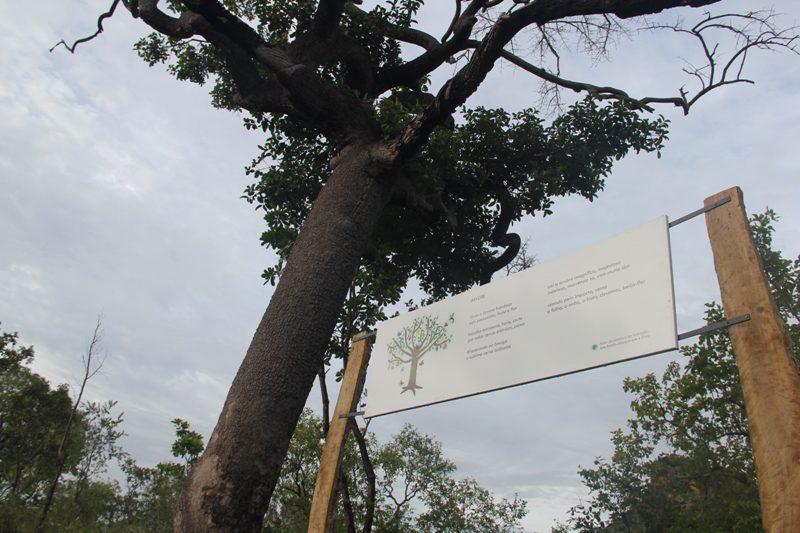 Emídio plantou suas instalações sob a copa de pés de buriti, uma árvore típica do Cerrado (Crédito: Paulo Atzingen)