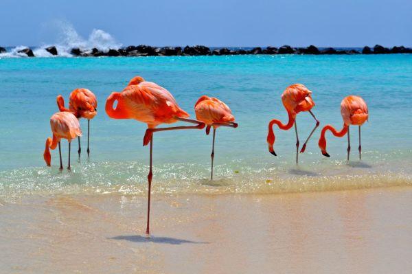 Autoridade de Turismo de Aruba convida empresas brasileiras para workshop na ilha