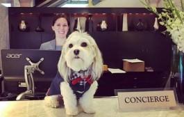 Hotel nos Estados Unidos contrata cão para a recepcionar hóspedes; entenda