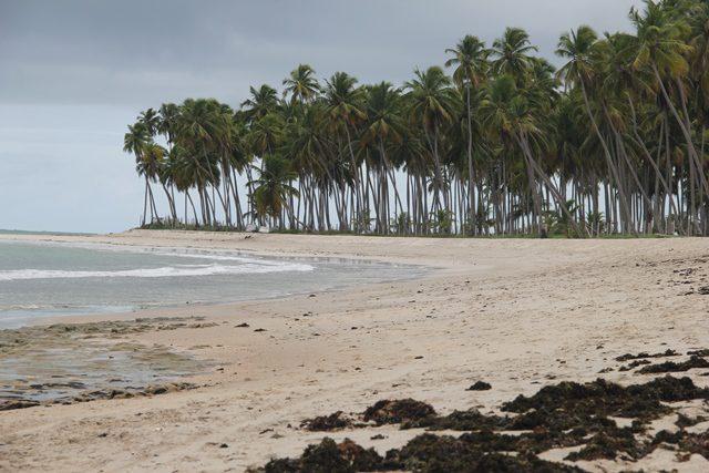 A praia dos Carneiros em sua quieta face e sem sol (Crédito: Paulo Atzingen)