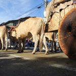 Carreiros de Trindade: fé, esperança e economia de mercado