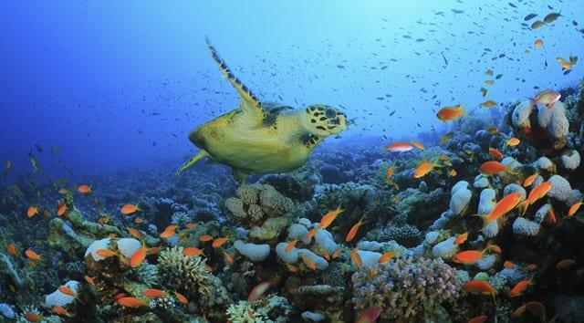 ONU debate a conservação da biodiversidade marinha