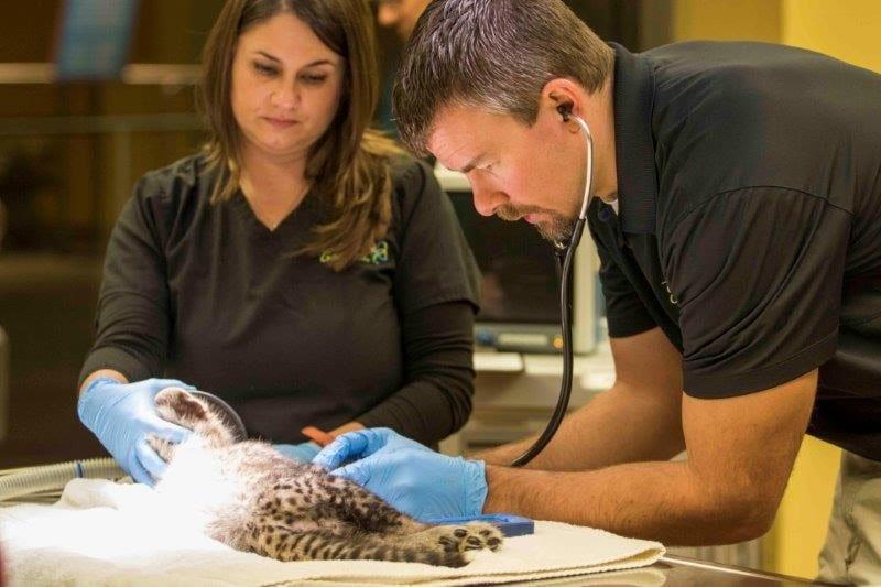 Busch Gardens Tampa Bay certificado pela American Humane por seu cuidado com animais
