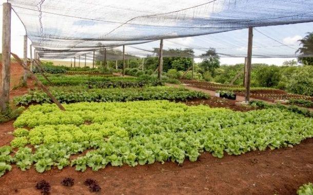Mavsa Resort Convention & Spa (SP) inaugura horta orgânica que pode ser visitada pelos hóspedes