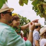 Vindima da Vinícola Góes apresenta novo formato e novas atrações para visitantes