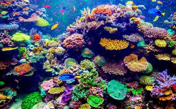 Iberostar preserva o futuro dos recifes de corais do Caribe e dos oceanos em todo o mundo