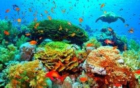 Iberostar inaugura novo laboratório de corais no Caribe