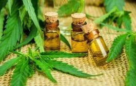 Expocannabis reunirá ciência, tecnologia e inovação sobre Cannabis medicinal e industrial