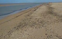O maior desastre ambiental- por Gaudêncio Torquato*